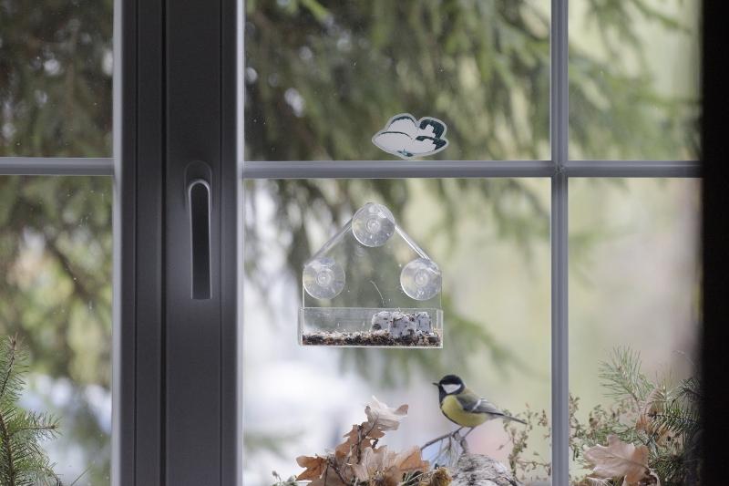 Jak zwabić ptaki do okna?