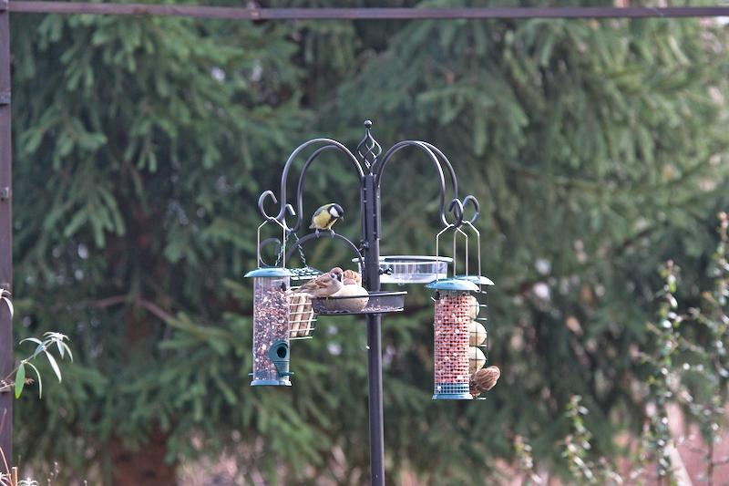 Stacja dokarmiania ptaków