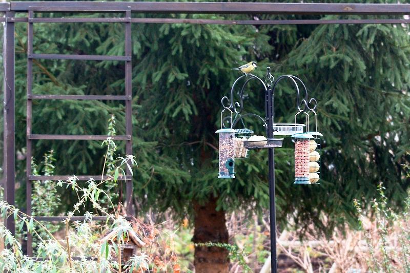 Stacja dokarmiania ptaków zimą