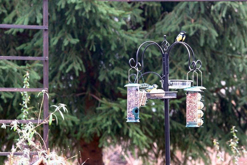 Ptaki zimujące przy karmnikach