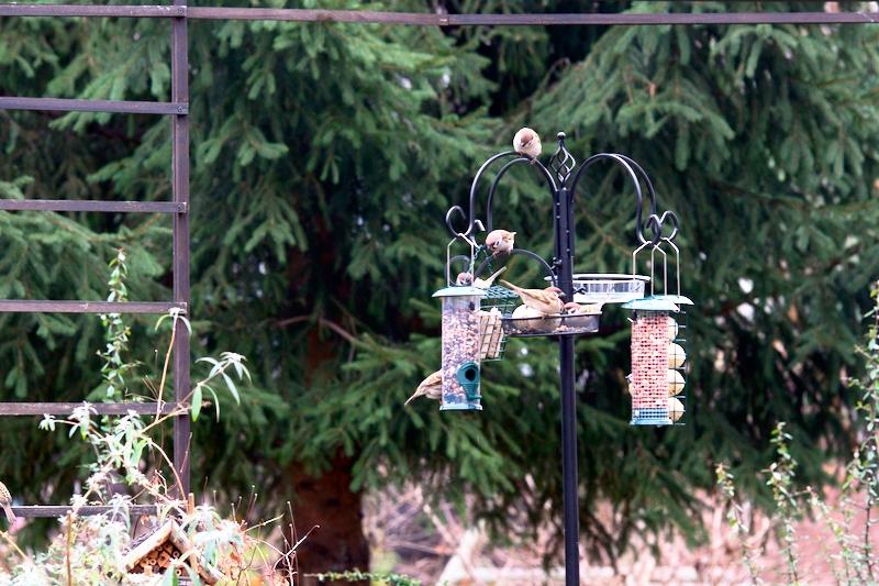 Ptaki zimujące w ogrodzie