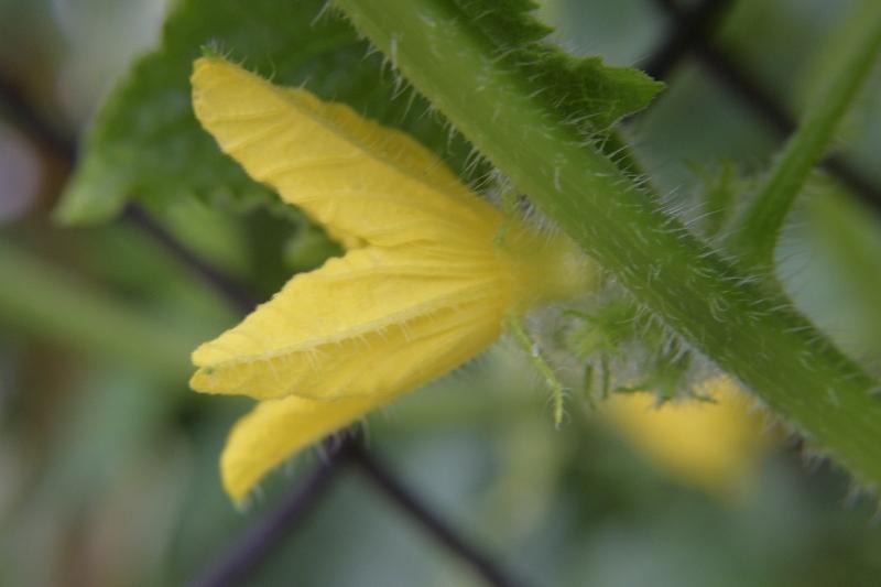 Rośliny miododajne kwitnące latem 2