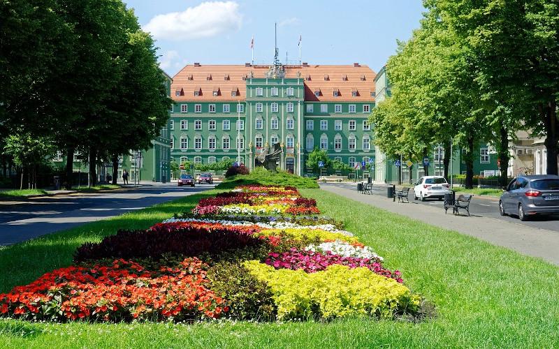 Łąka w mieście w zieleni publicznej 2
