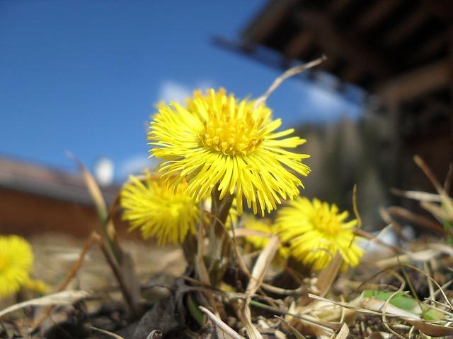 Rośliny dla pszczół wiosną 2