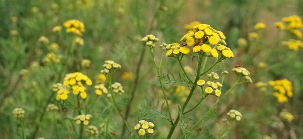 Które kwiaty nadają się na łąkę
