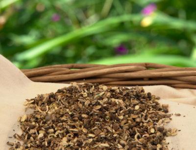 Nasiona kwiatów łąkowych