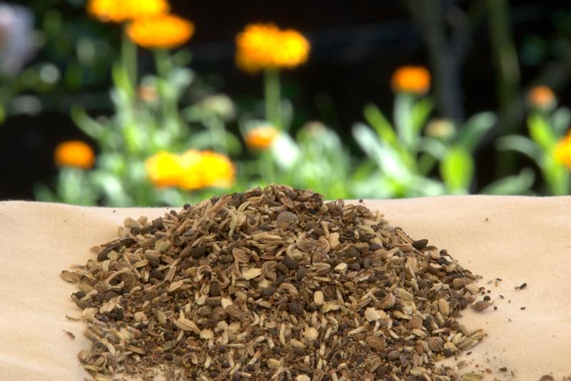 łąka kwiatowa ozima