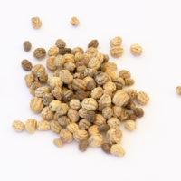 nasturcja nasiona microgreens
