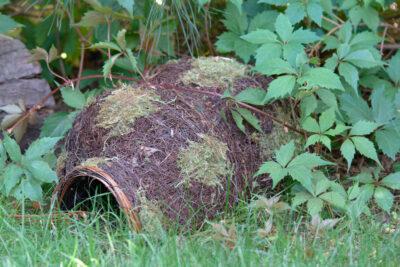 schronienie dla jeża w ogrodzie
