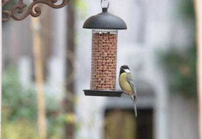 Orzechy to zdrowy pokarm dla sikorek i innych ptaków zimujących w Polsce