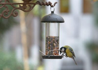 Karmnik tubowy z ziarnem dla ptaków