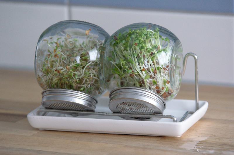 Zestaw kiełkownic szklanych