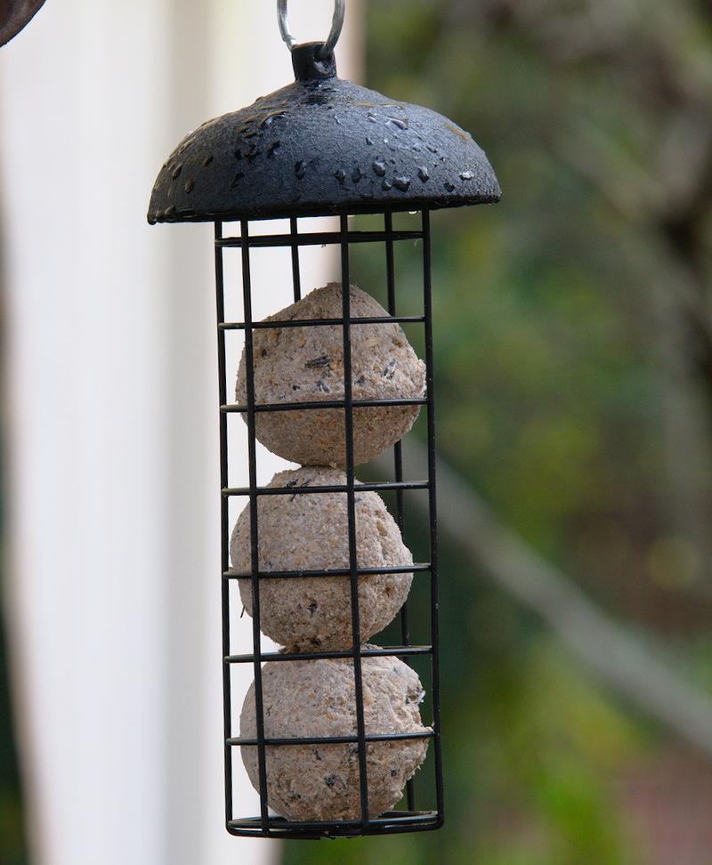 Kule tłuszczowe dla ptaków