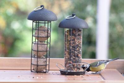 Ptaki zawsze znajdą sposób aby dostać się do ziarna