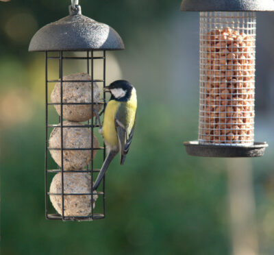 Orzechy i kule tłuszczowe to pokarm wabiący najwięcej ptaków