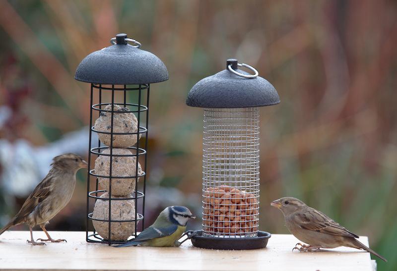 Ptaki przylatują do karmników