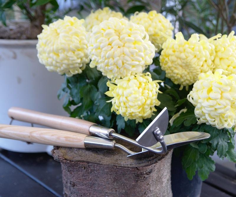 Zestaw narzędzi do ogrodu warzywnego