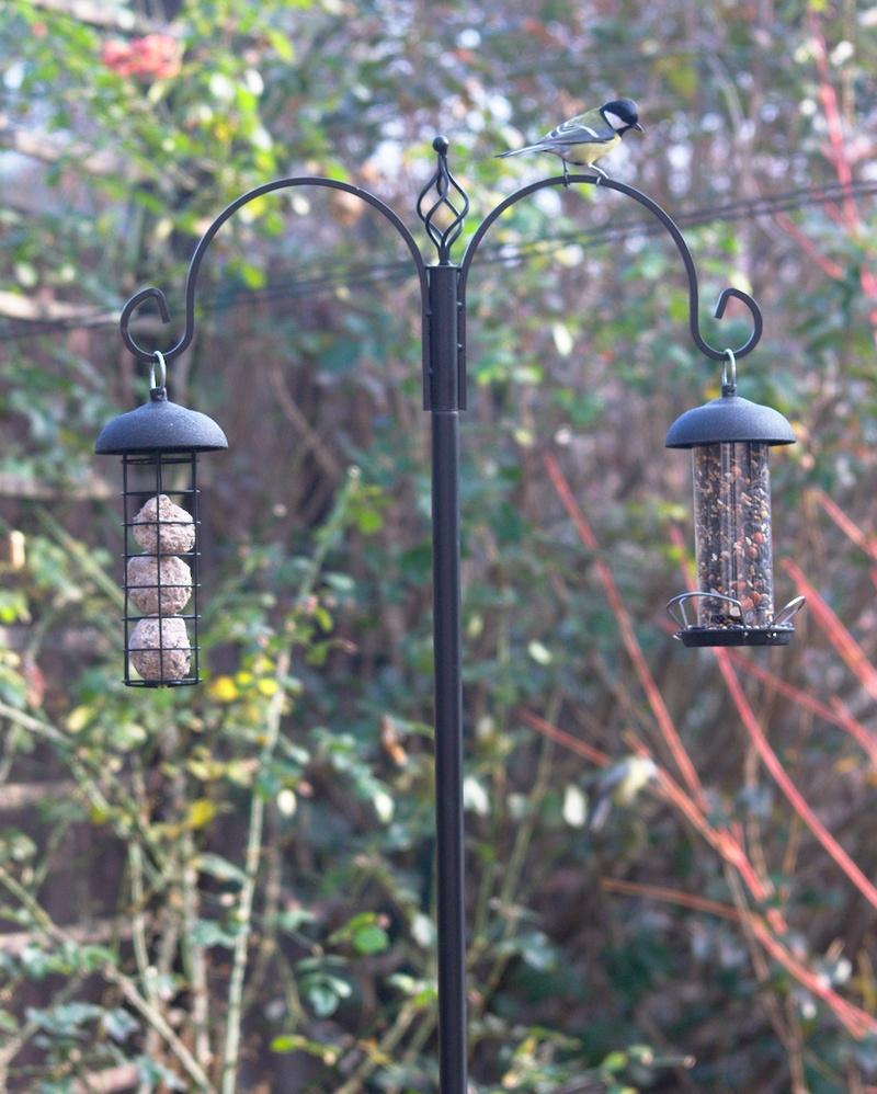 Karmniki dla ptaków na wysokim drążku