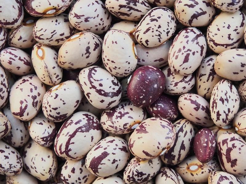 Fasola Barlotto nasiona