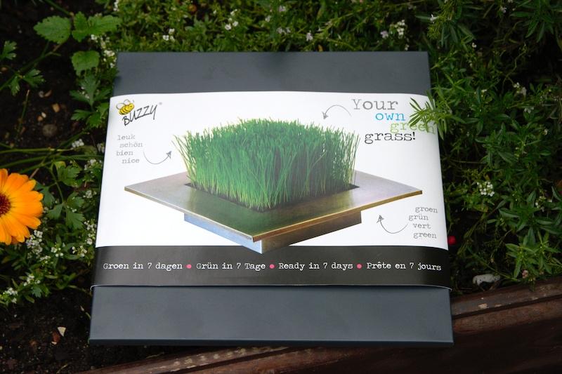 Czy da się założyć trawnik w doniczce?