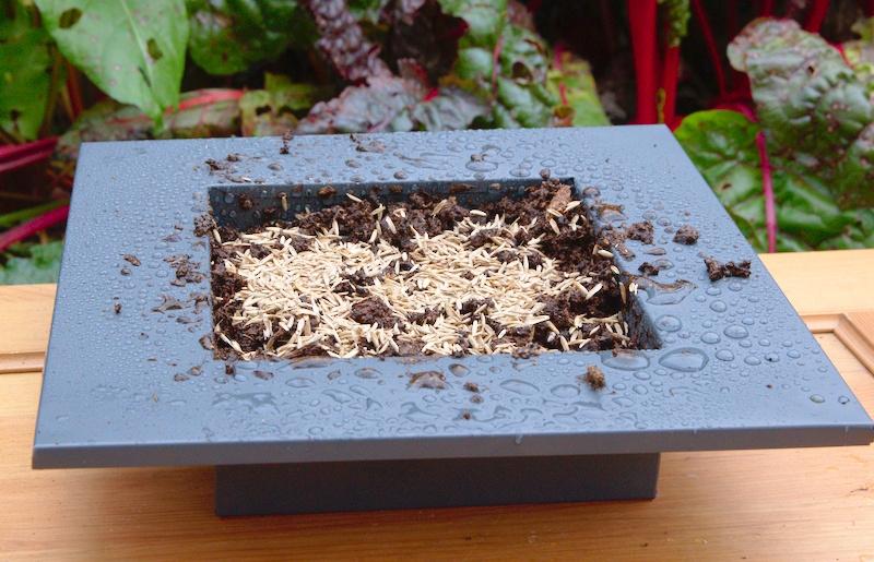 Wysiewanie trawy w doniczce
