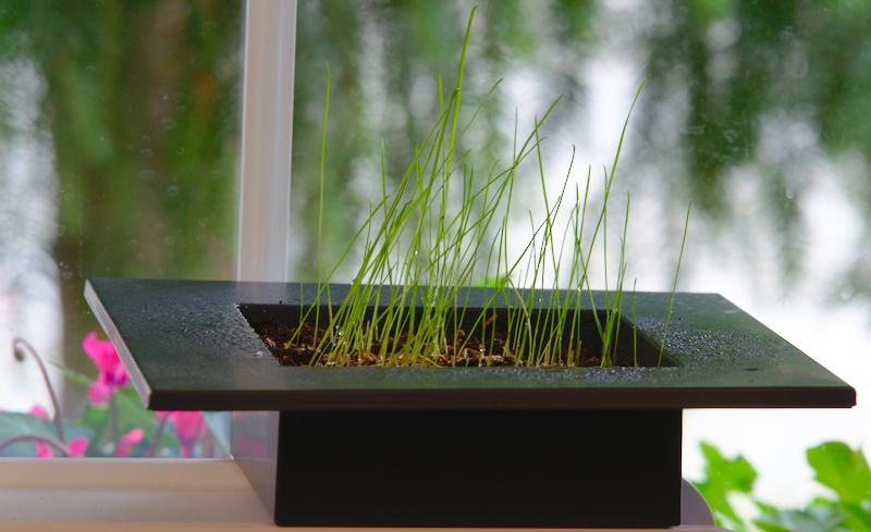 Trawnik na parapecie