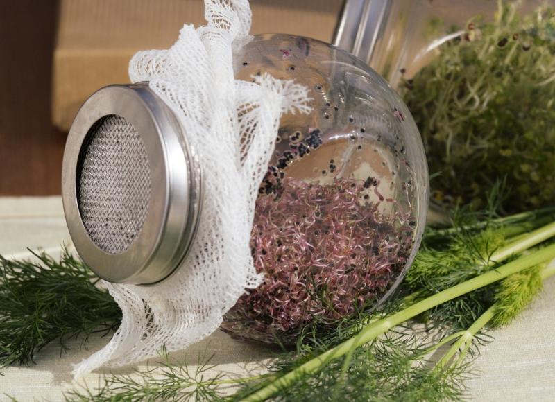 Portulaka warzywna na kiełki 2g 2