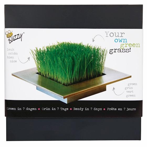 trawnik w domu