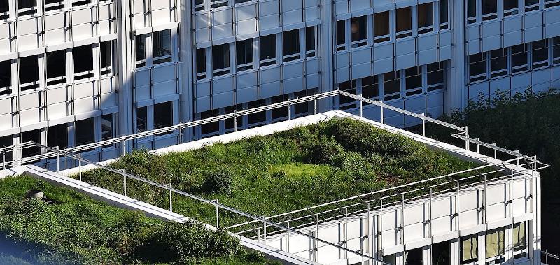 Nasiona kwiatów i ziół na zielony dach