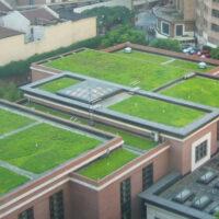 Mieszanka traw zielony dach