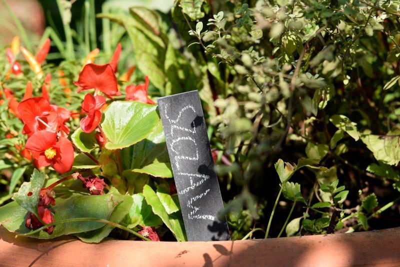Znaczniki do roślin czarne