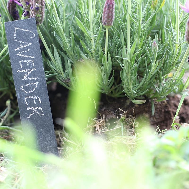 Znaczniki do roślin czarne z białym ołówkiem 4